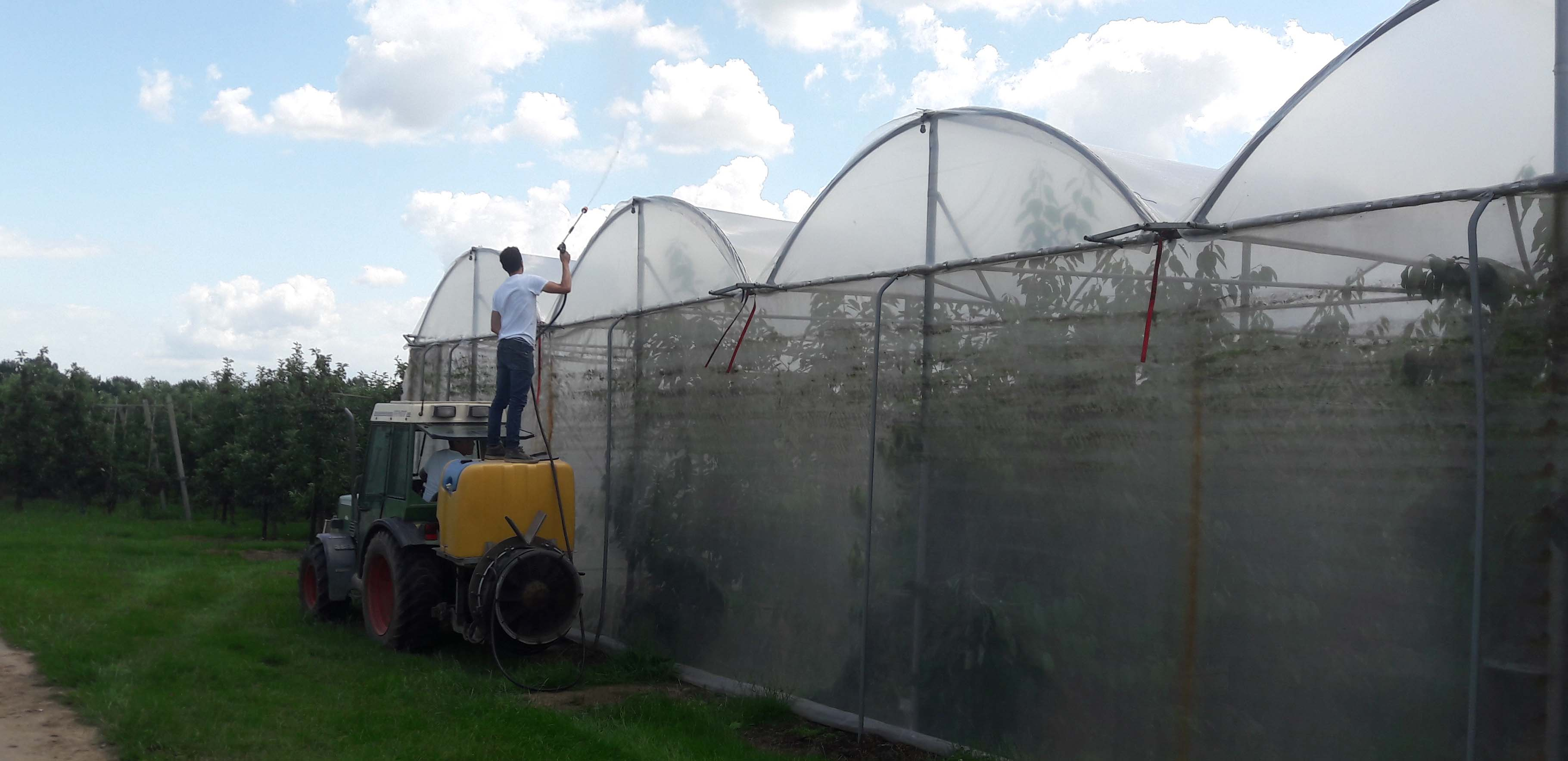 fruit grower applies a coating for temperature reduction