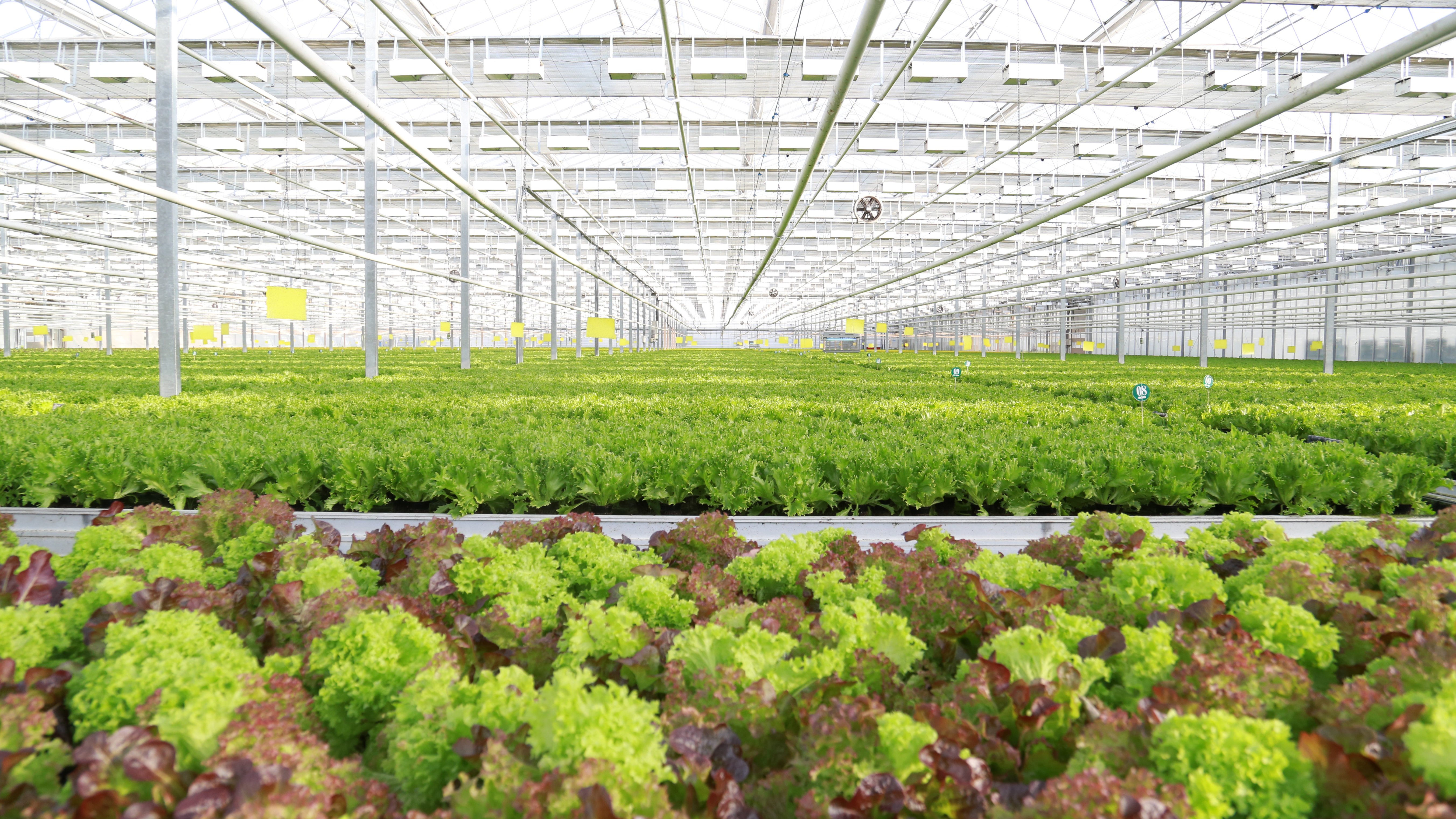 "growing salads and herbs in greenhouses - Agrocombinat ""Moskovsky"""