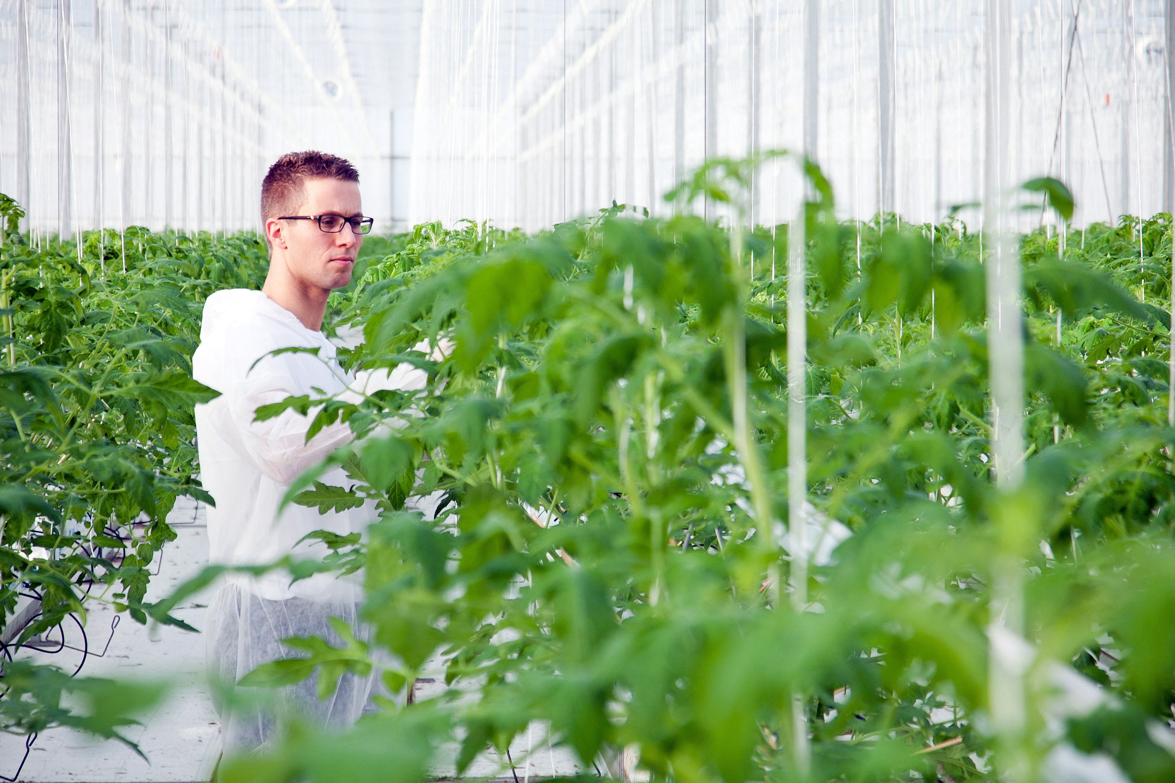 Consultant in greenhouse
