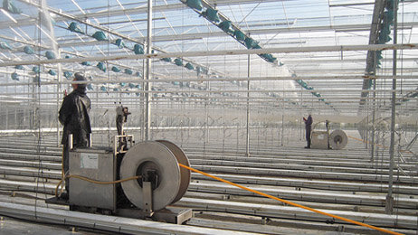 Cleaning greenhouse interior