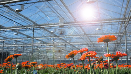 More light in the greenhouse by improving transmission