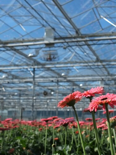 ReduSystems products create more light in the greenhouse